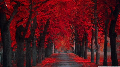 36+ Red wallpapers ·① Download free beautiful backgrounds for desktop computers and smartphones ...