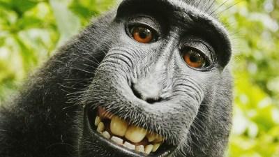 Funny Monkey Wallpaper ·① WallpaperTag