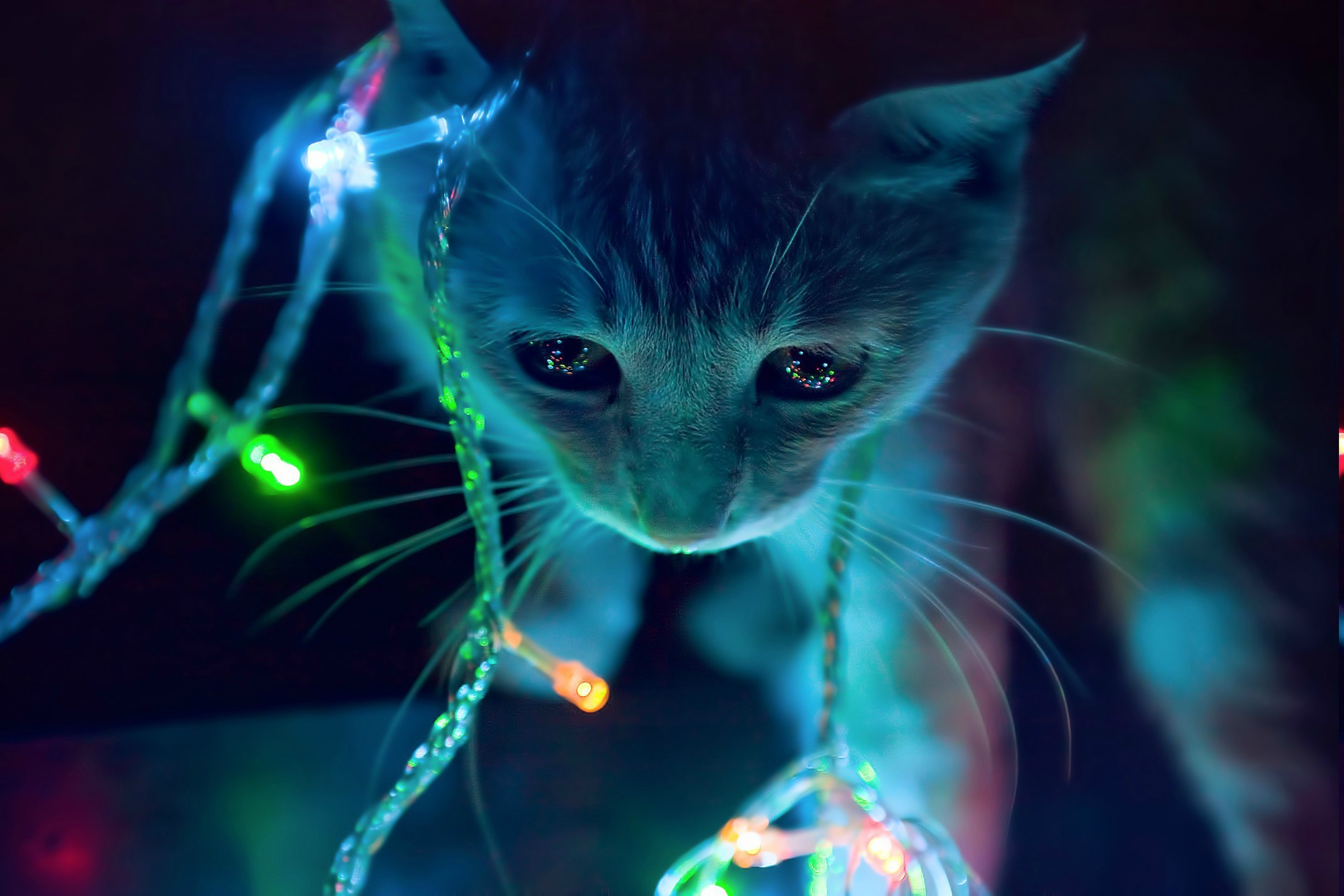 Gif As Wallpaper Iphone Christmas Lights Wallpaper 183 ① Download Free Cool Full Hd