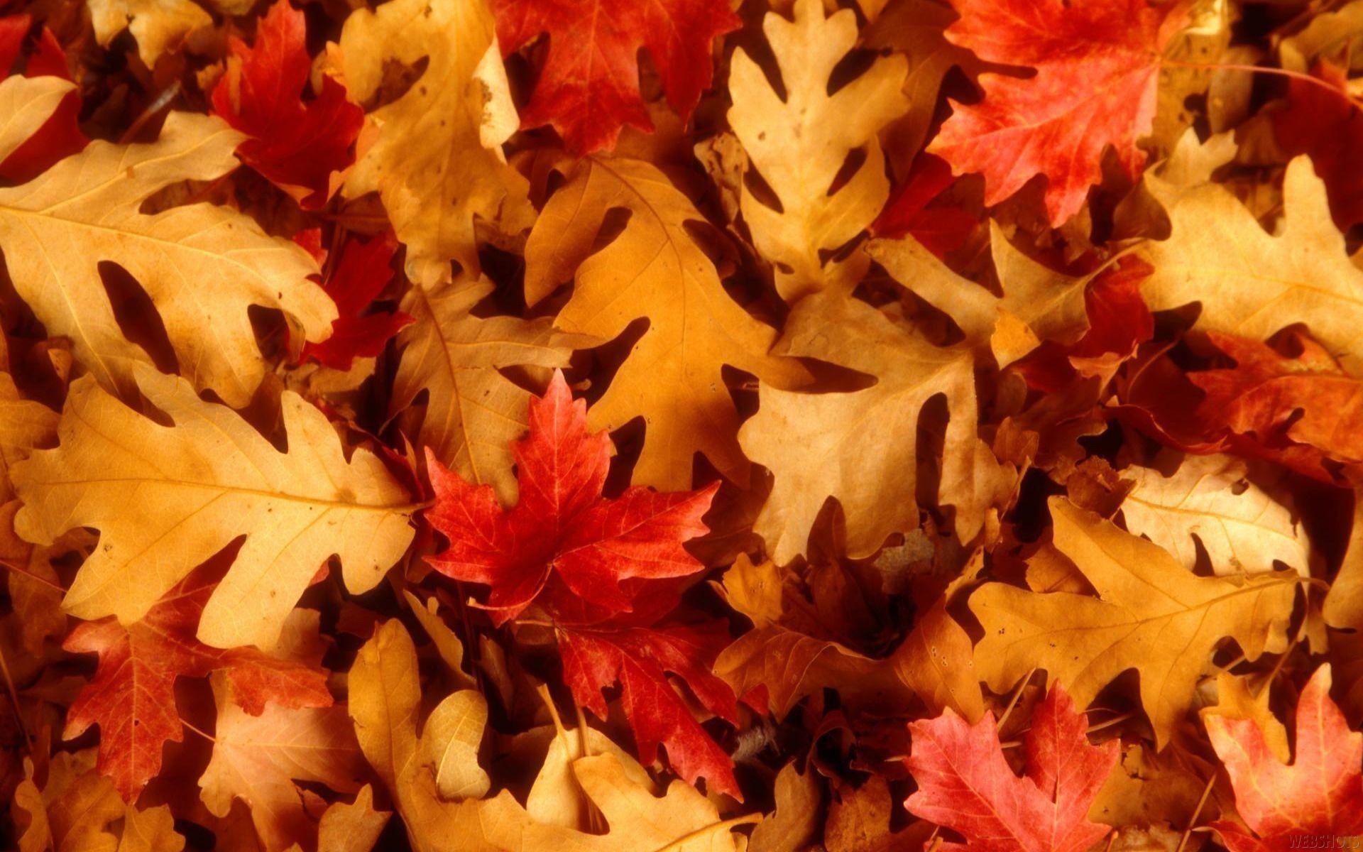 Fall Foliage Wallpaper 1920x1080 Fall Leaf Background 183 ①