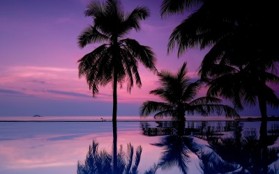 Palm Tree wallpaper ·① Download free HD wallpapers for desktop and mobile devices in any ...