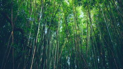 Bamboo Desktop Wallpaper ·①