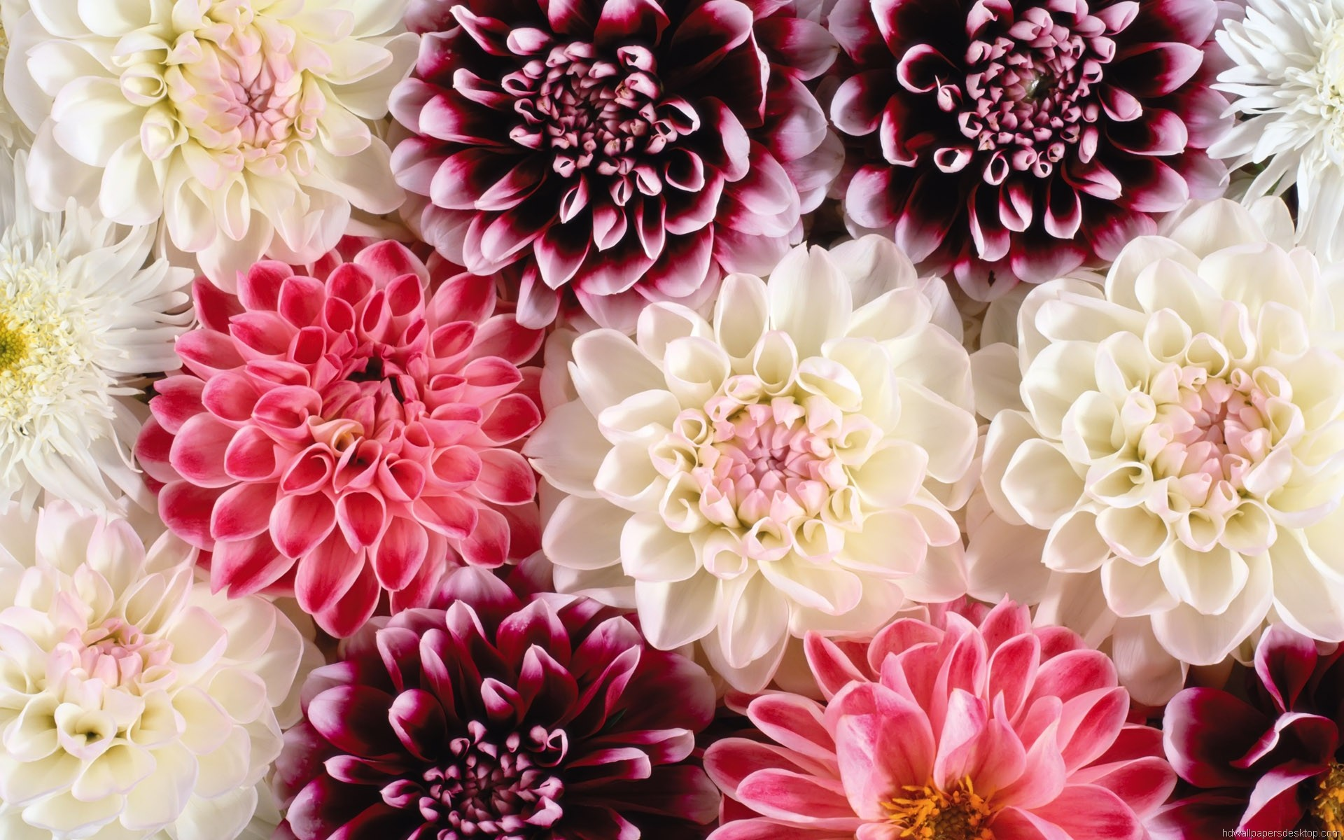 Pink Iphone 6 Wallpaper Floral Desktop Wallpaper 183 ① Download Free Cool Full Hd