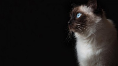 Warrior Cats wallpaper ·① Download free awesome High Resolution wallpapers for desktop, mobile ...