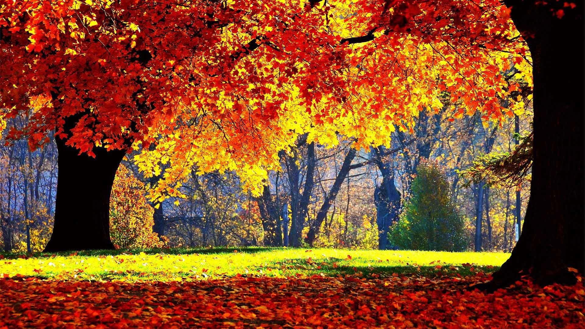 Autumn Leaves 3d Live Wallpaper Wallpaper Fall Season 183 ①