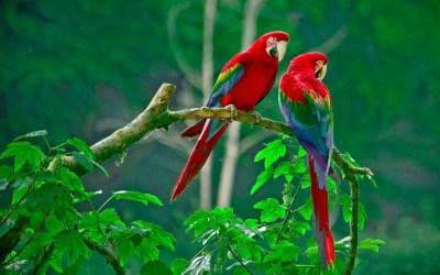Love Birds Wallpapers ·①