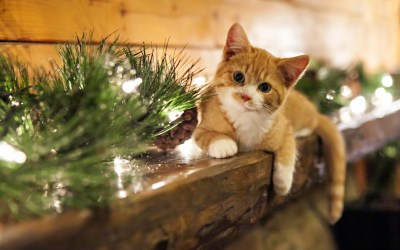 Christmas Cat Wallpaper ·①