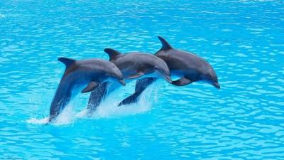 Dolphin Wallpapers for Desktop ·①