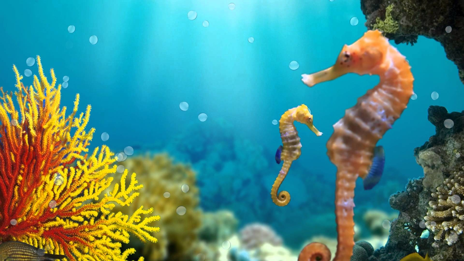 Animated Fish Tank Wallpaper Seahorse Wallpaper 183 ①