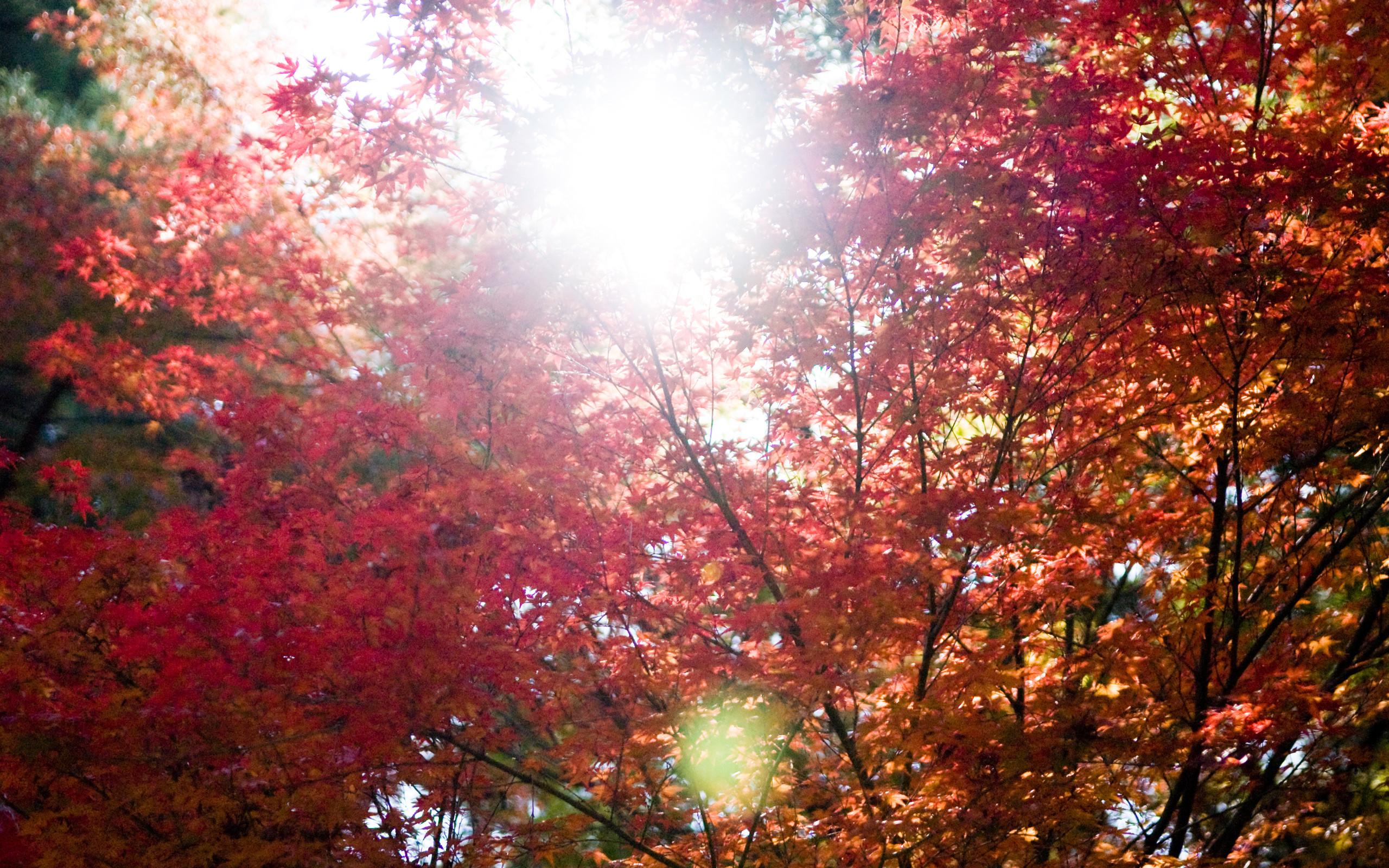 Fall Foliage Wallpaper Widescreen Fall Foliage Wallpaper For Desktop 183 ①