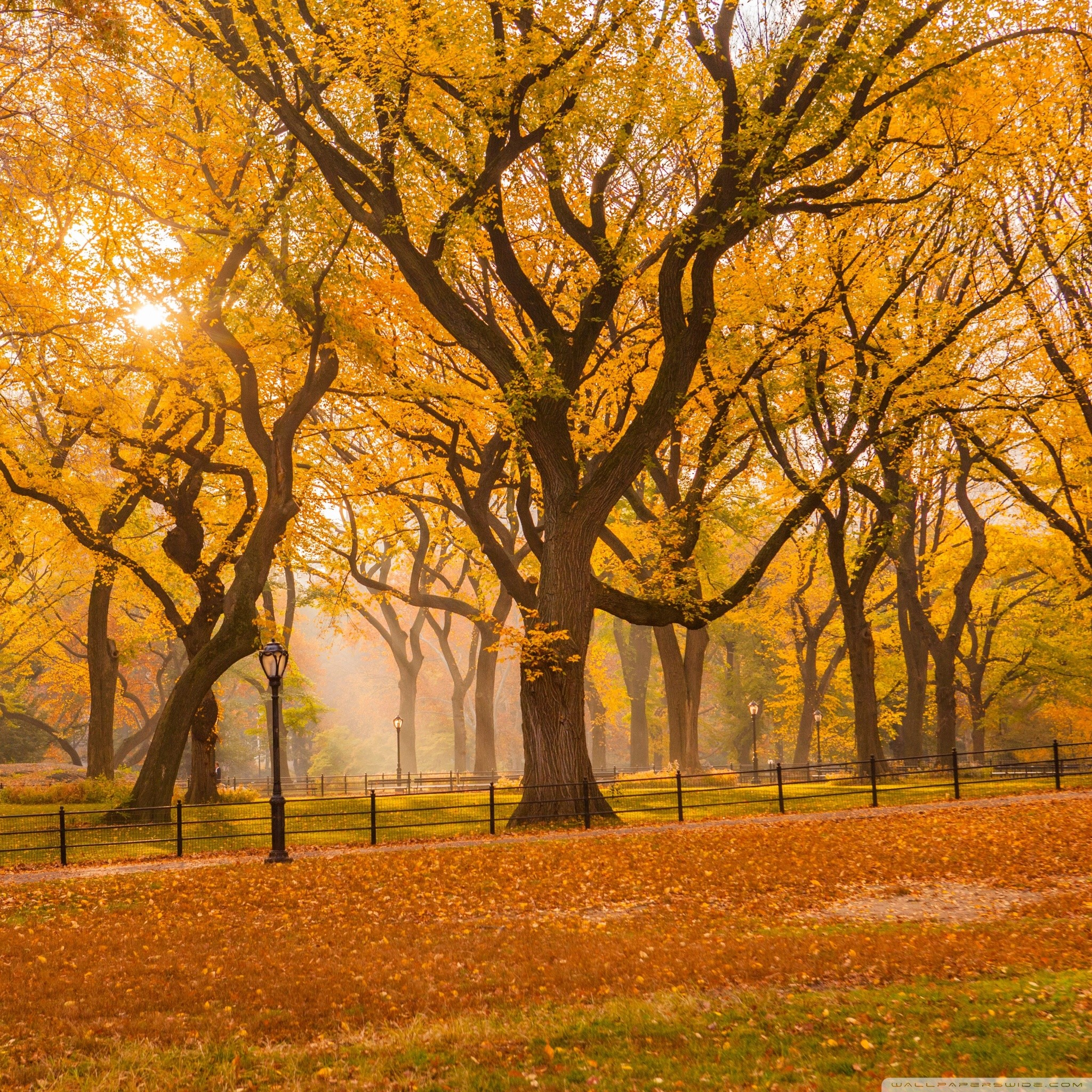Fall Wallpaper For Desktop 1920x1080 Fall Foliage Wallpaper 183 ①