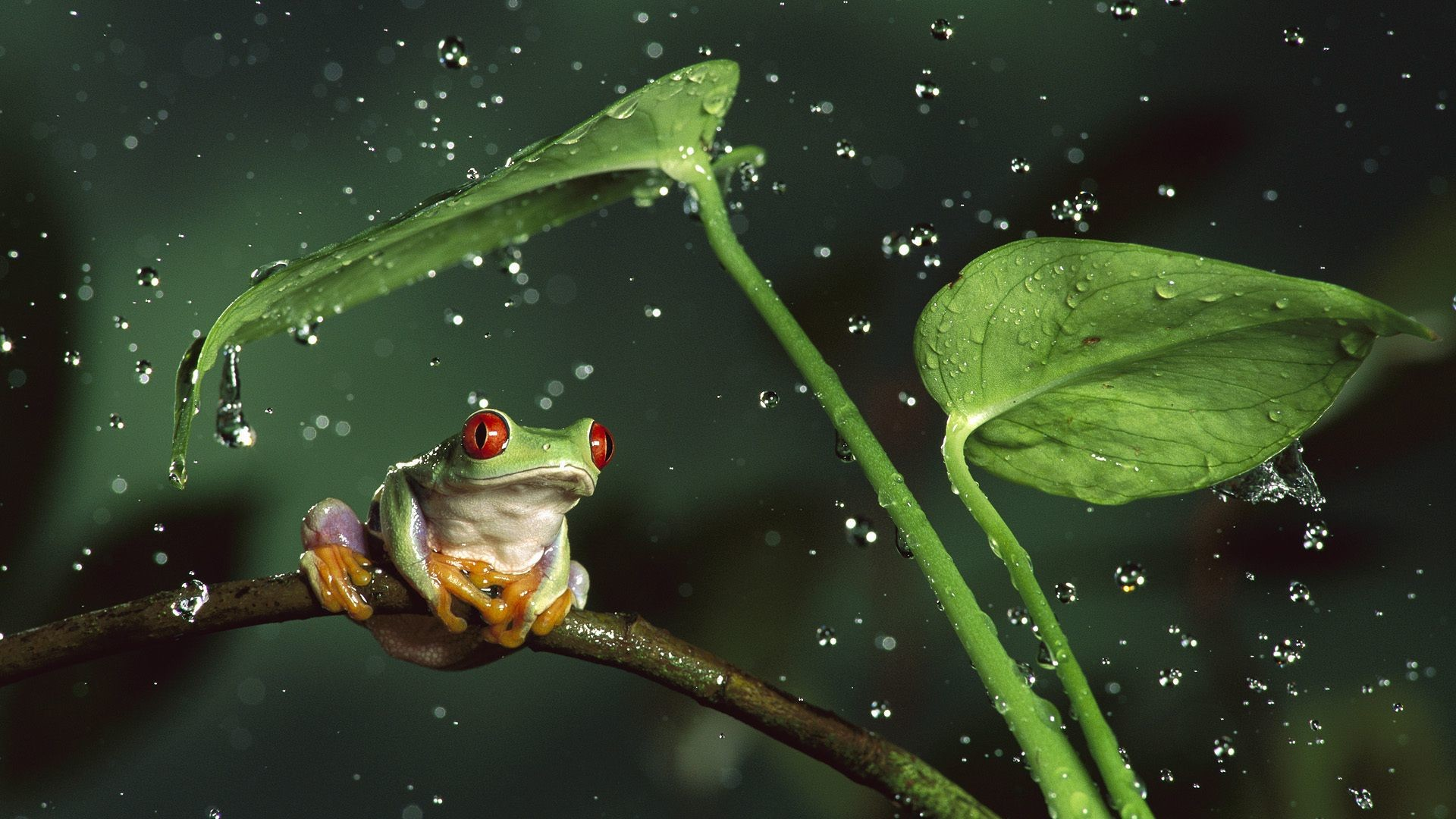 Cute Lock Screen Wallpapers Desktop Funny Frog Wallpaper 183 ①