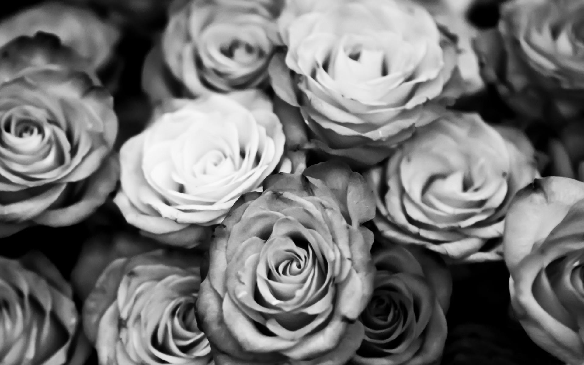 Black Rose Iphone Wallpaper Roses Background Images 183 ①