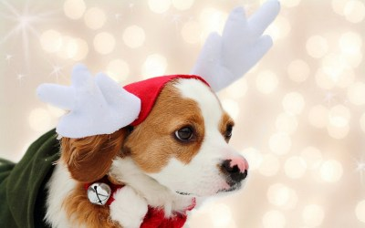 Christmas Dog Wallpaper ·① WallpaperTag