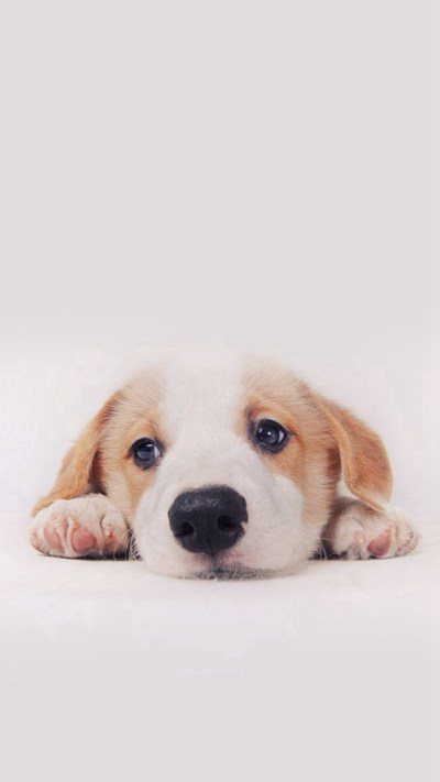 Cute Puppy Pictures Wallpaper ·①