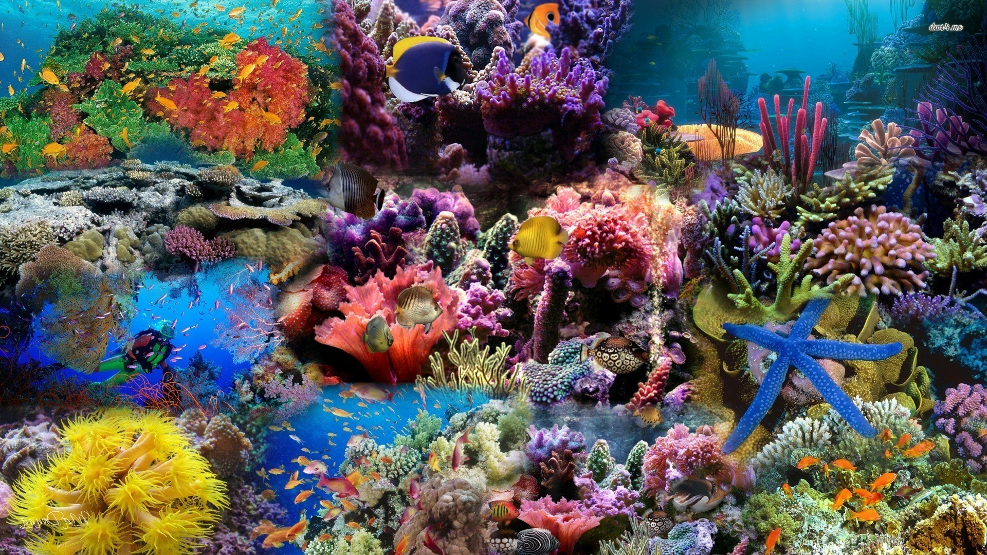 Under The Sea Wallpaper Hd Under The Sea Wallpapers 183 ①