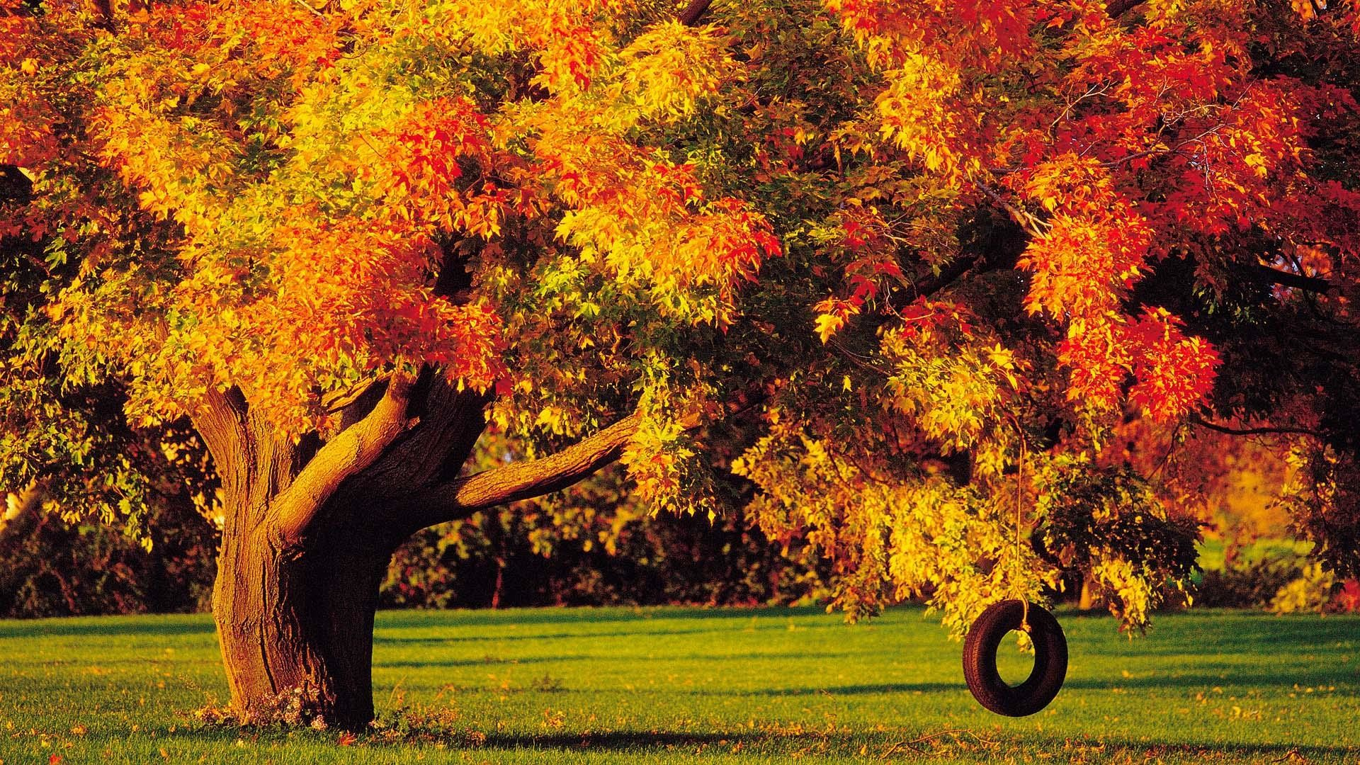 Fall Themed Iphone Wallpapers Fall Foliage Wallpaper For Desktop 183 ①
