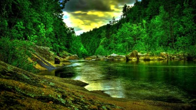 Forest wallpaper HD ·① Download free awesome backgrounds for desktop and mobile devices in any ...