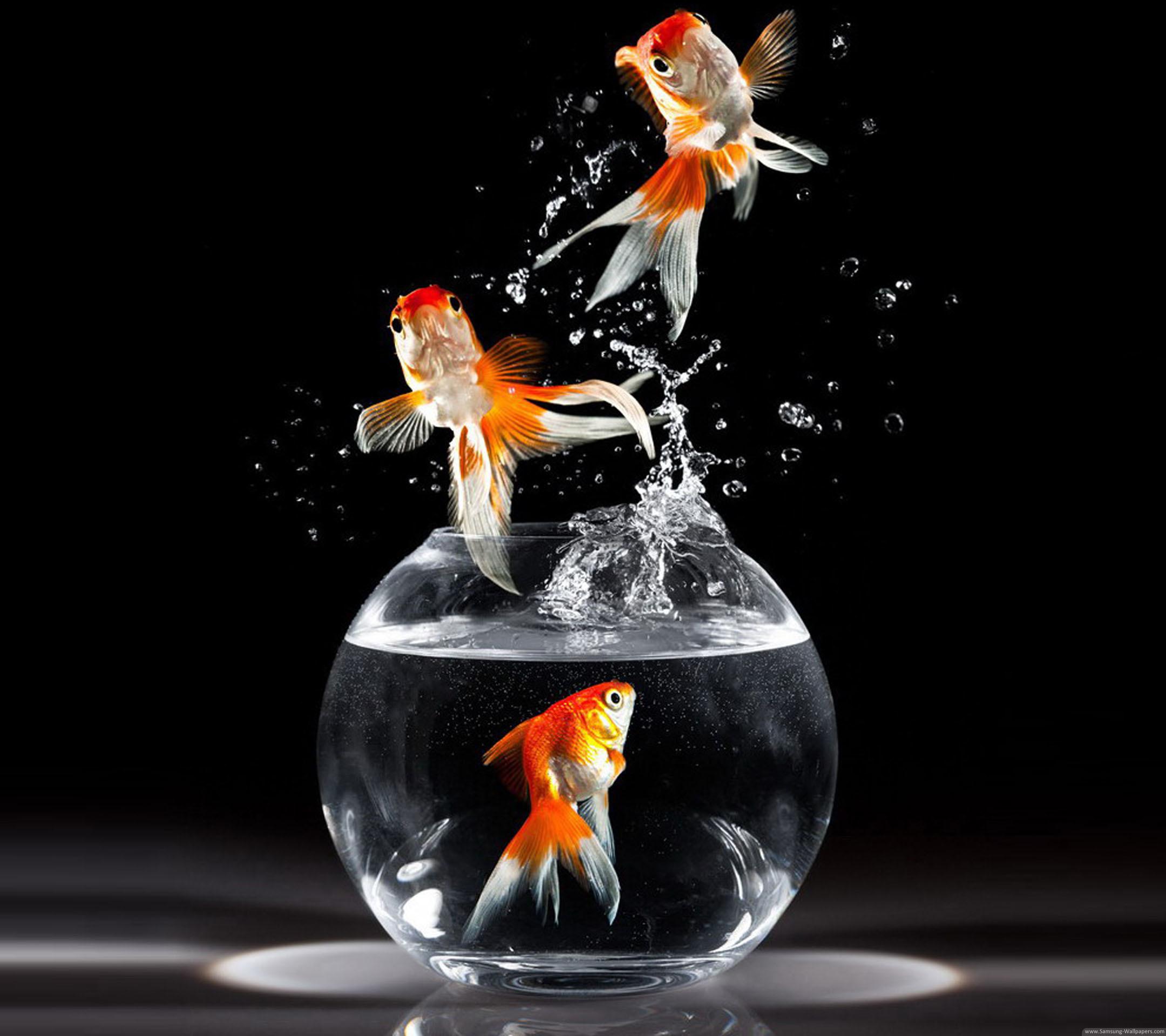 Download Koi Fish 3d Wallpaper Goldfish Wallpaper 183 ①