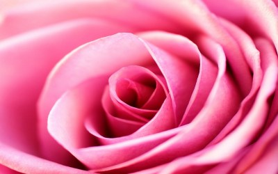 Roses background ·① Download free beautiful HD wallpapers for desktop, mobile, laptop in any ...