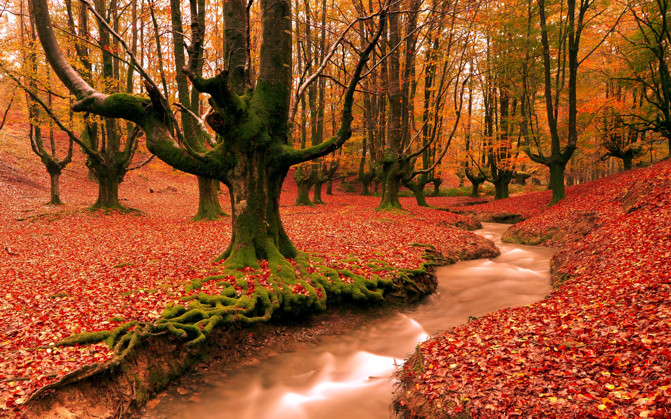 Fall Android Wallpaper Fall Desktop Wallpaper ① Download Free Awesome High Resolution