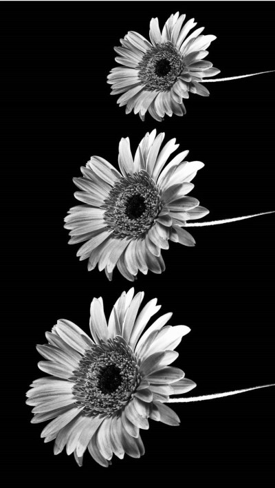 iPhone wallpaper Tumblr ·① Download free cool High Resolution backgrounds for desktop computers ...