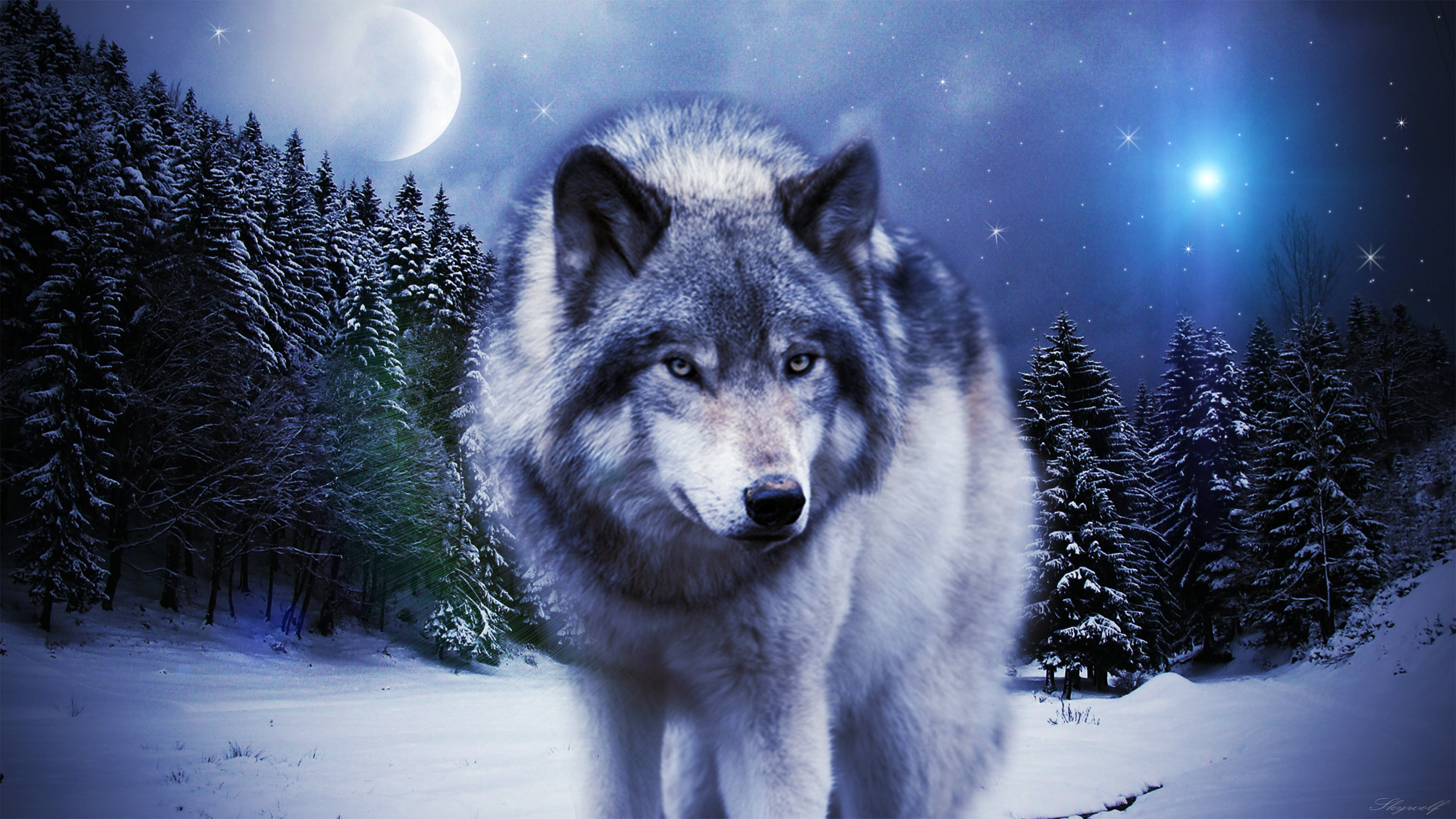Macbook Animated Wallpaper Timber Wolf Wallpaper 183 ①