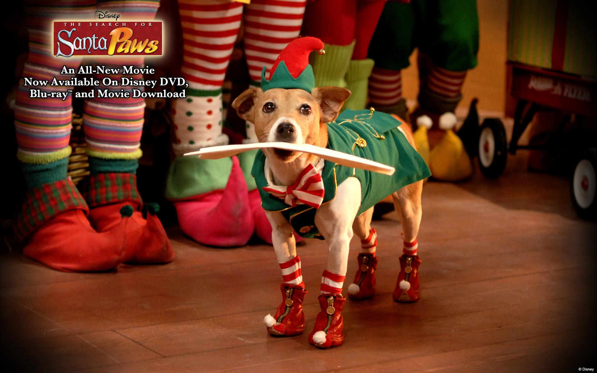 Cute Merry Christmas Wallpaper Dogs Christmas Dog Wallpaper 183 ① Wallpapertag
