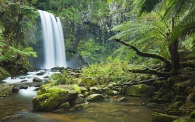 Amazon RainForest Wallpaper ·①