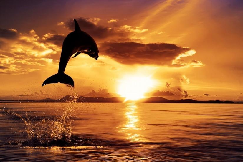 3d Dolphin Wallpaper For Windows 7 Dolphin Wallpaper 183 ① Download Free Cool Hd Wallpapers For