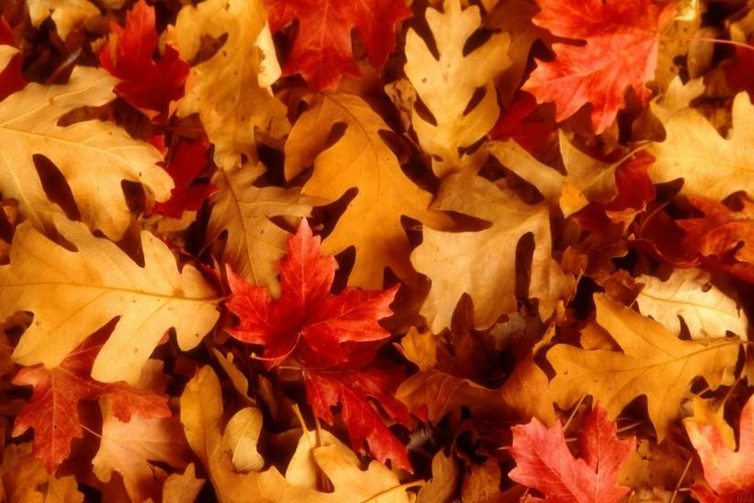 Fall Leaves Falling Wallpaper 71 Fall Backgrounds Tumblr 183 ① Download Free Cool Hd