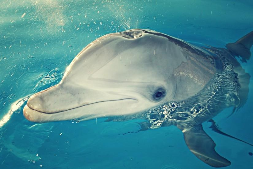 Wallpaper Dolphin 3d Dolphin Wallpaper 183 ① Download Free Cool Hd Wallpapers For