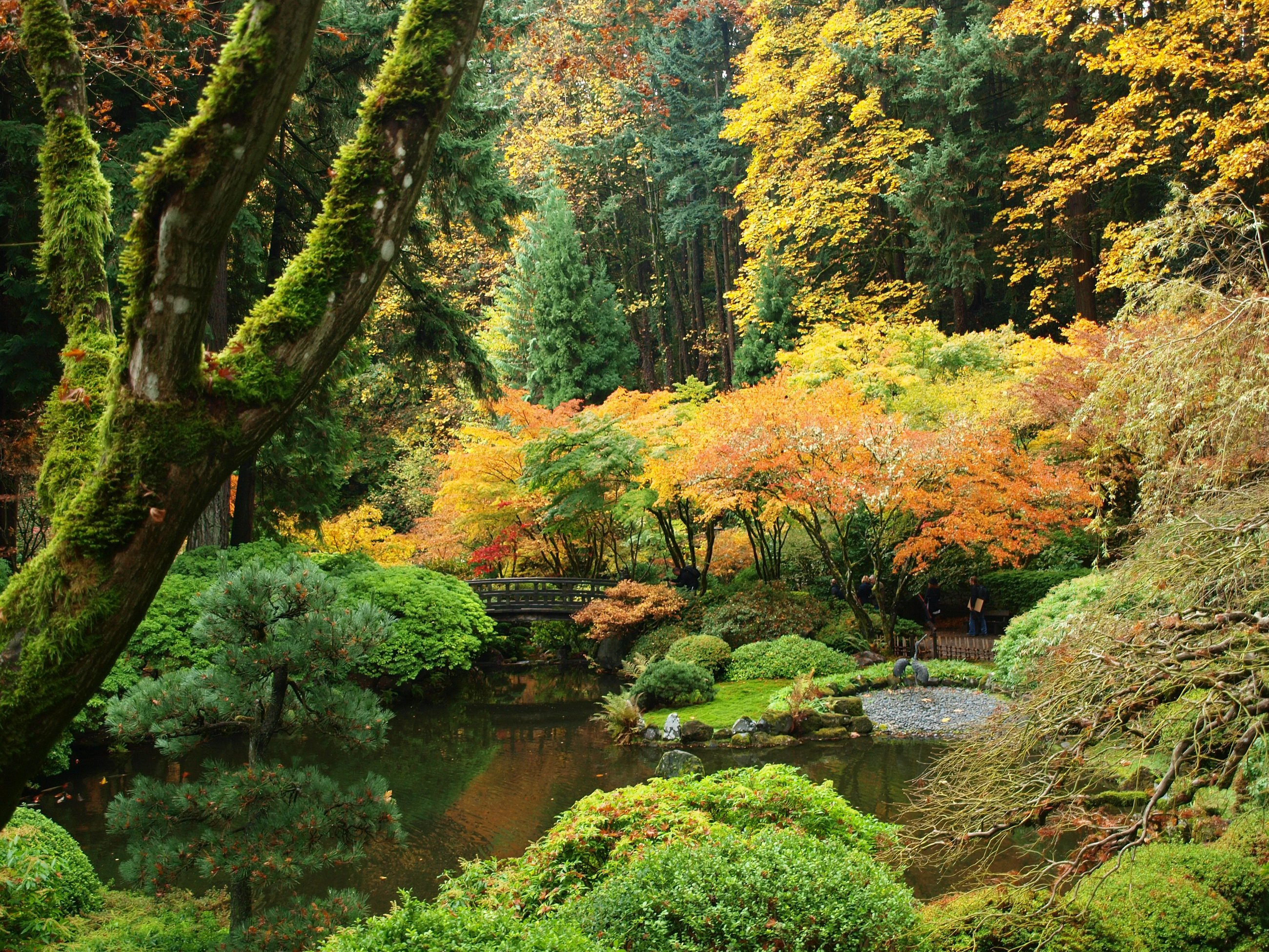 Jardin Japonais Wallpaper Usa Garden Autumn Portland Japanese Shrubs Trees Nature