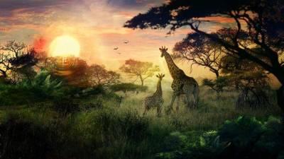 animals, Giraffes, Landscape, Sun, DeviantArt, Nature Wallpapers HD / Desktop and Mobile Backgrounds