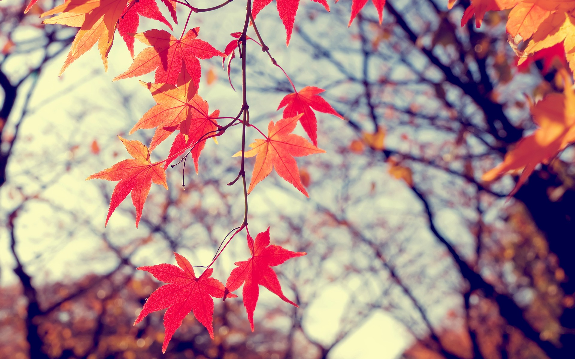 Fall Leaf Wallpaper For Mobile Landscape Winter Leaves Plants Nature Wallpapers Hd