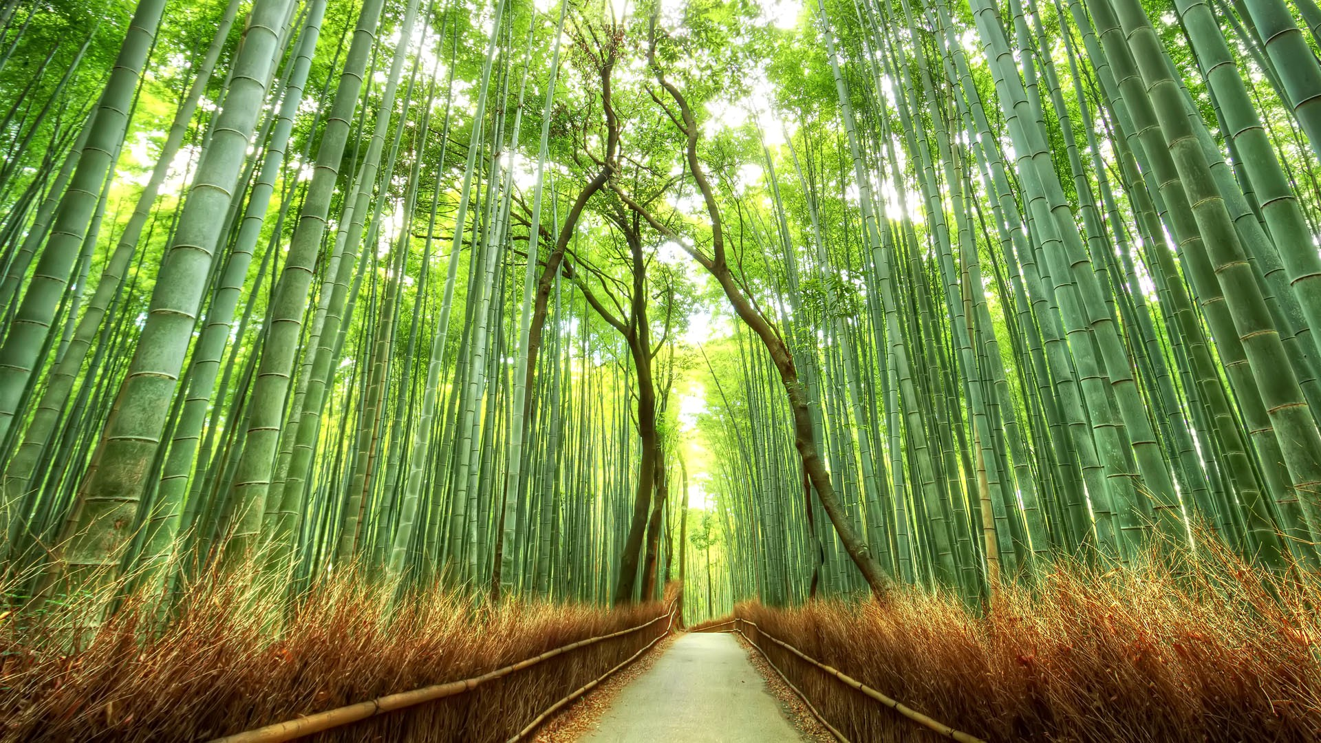 Vegetable Garden In Fall Wallpaper Landscape Bamboo Path Japan Nature Fence Forest