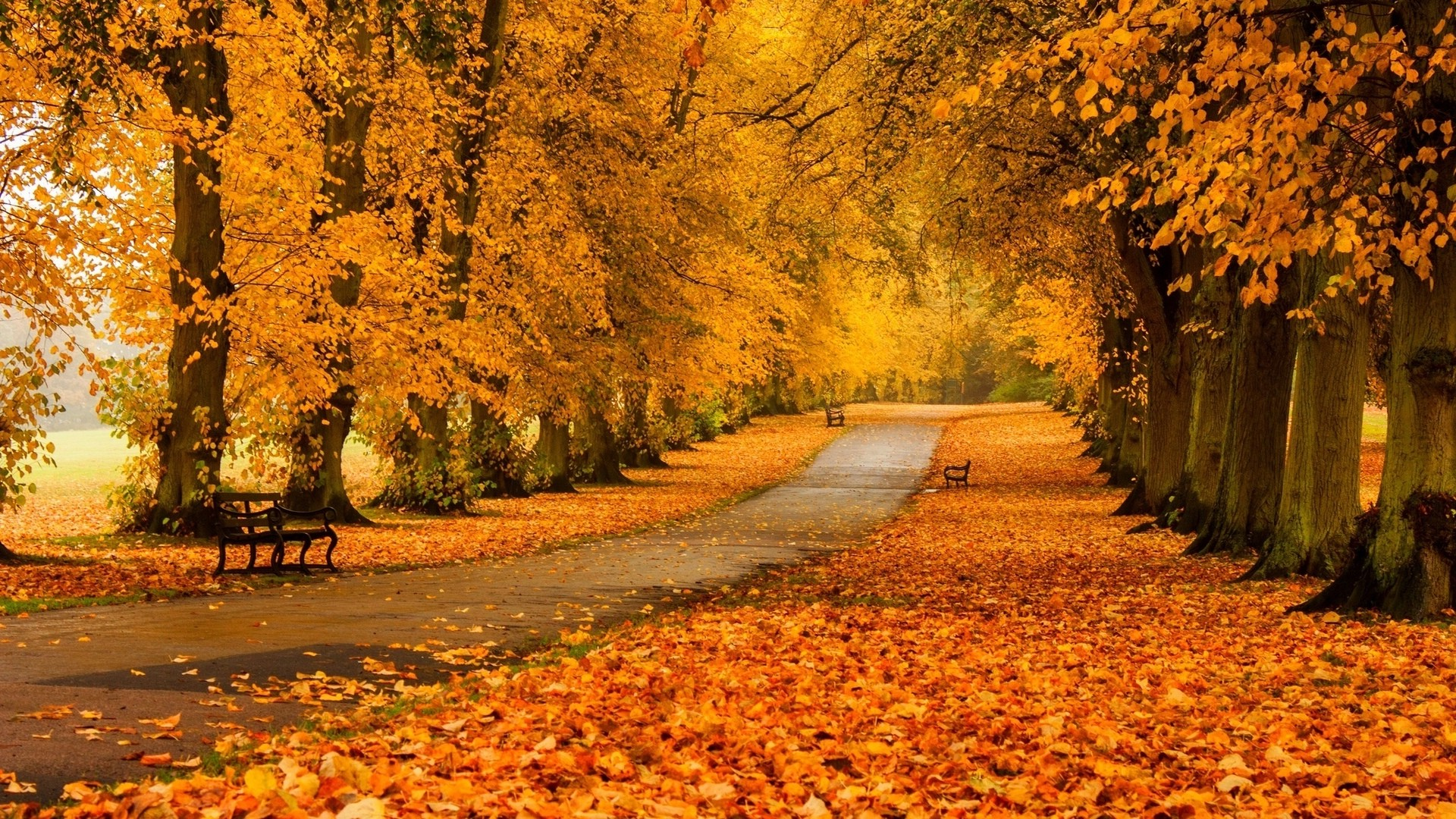 Fall Leaves Falling Wallpaper Nature Landscape Trees Forest Fall Branch Bench
