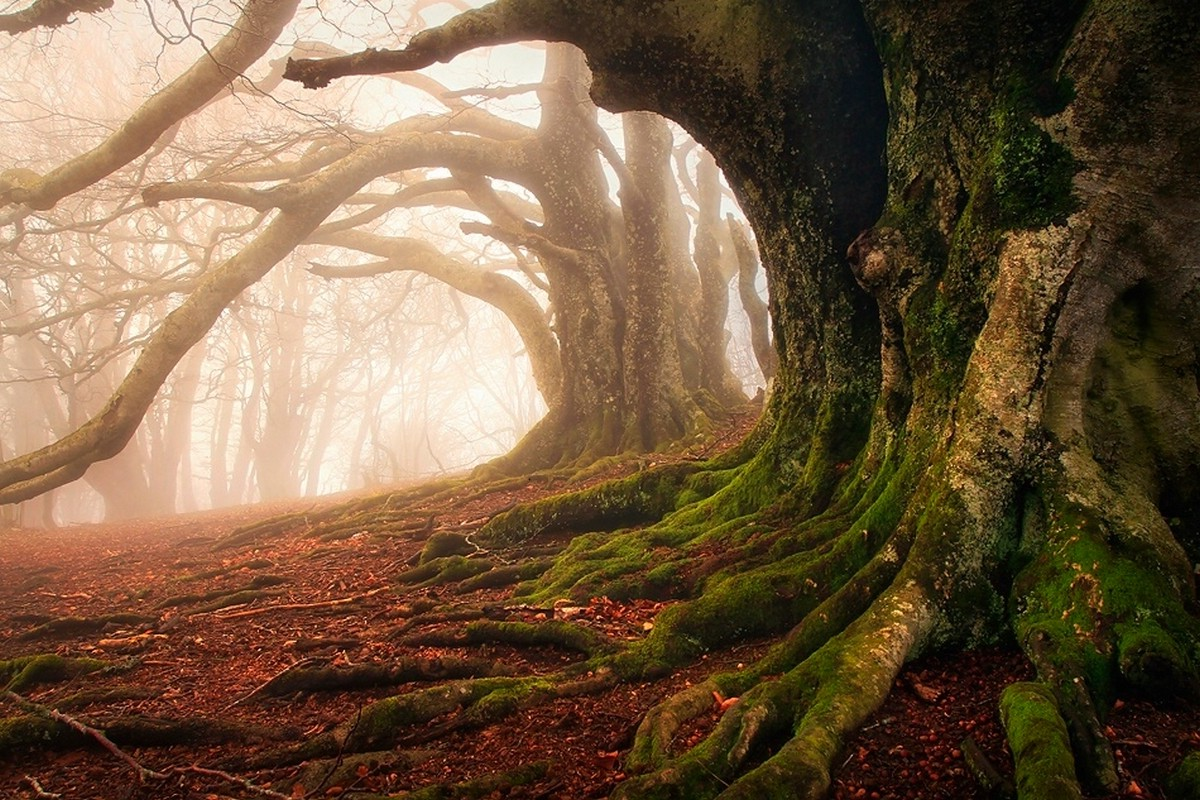 Fantasy Forest 3d Desktop Wallpaper Mist Moss Forest Roots Trees Ancient Leaves Nature