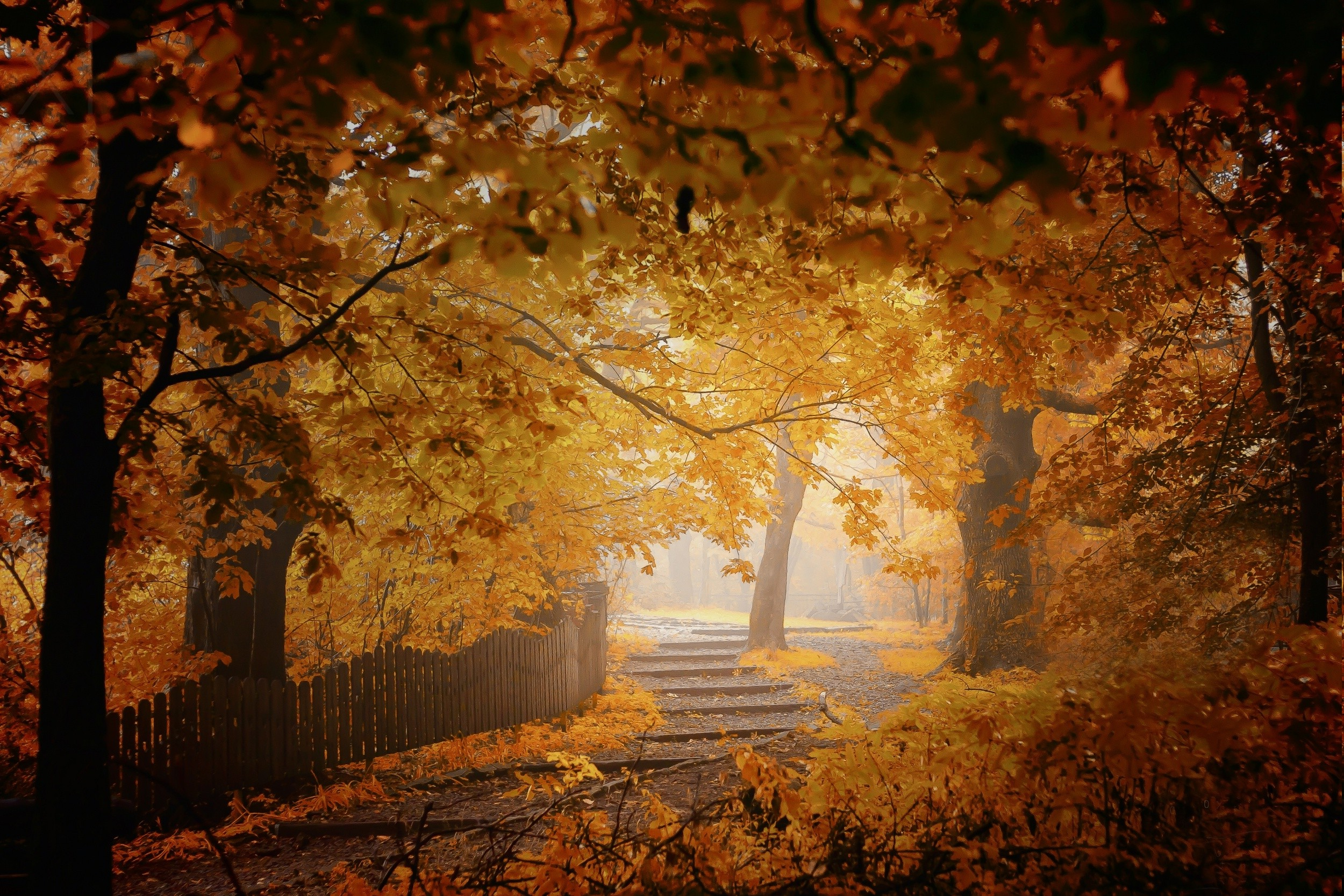 Fall Wallpaper Hd 1280x1024 Fall Mist Fence Walkway Leaves Trees Yellow Orange