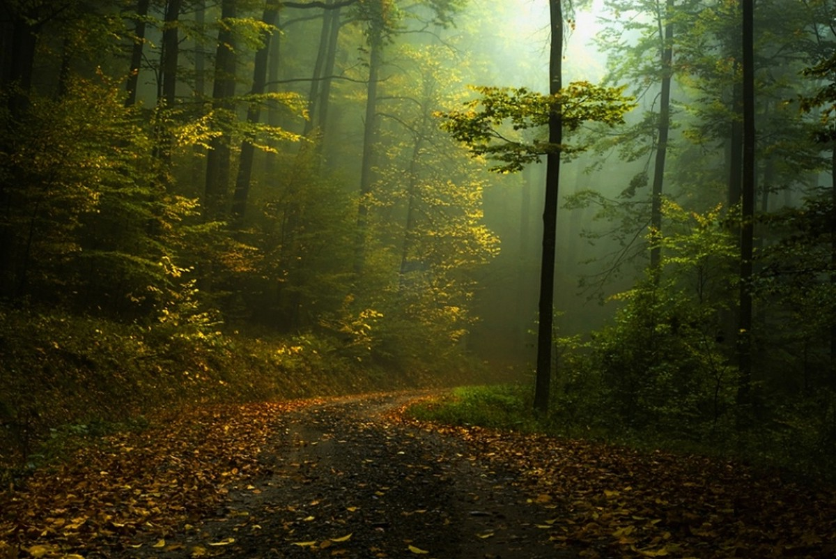 Green Animal Wallpaper Fall Path Mist Forest Shrubs Morning Landscape