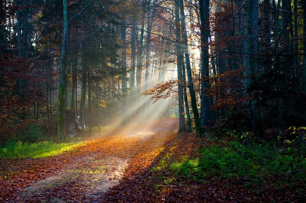Best 3d Animal Wallpapers Sun Rays Forest Fall Path Leaves Trees Grass Nature