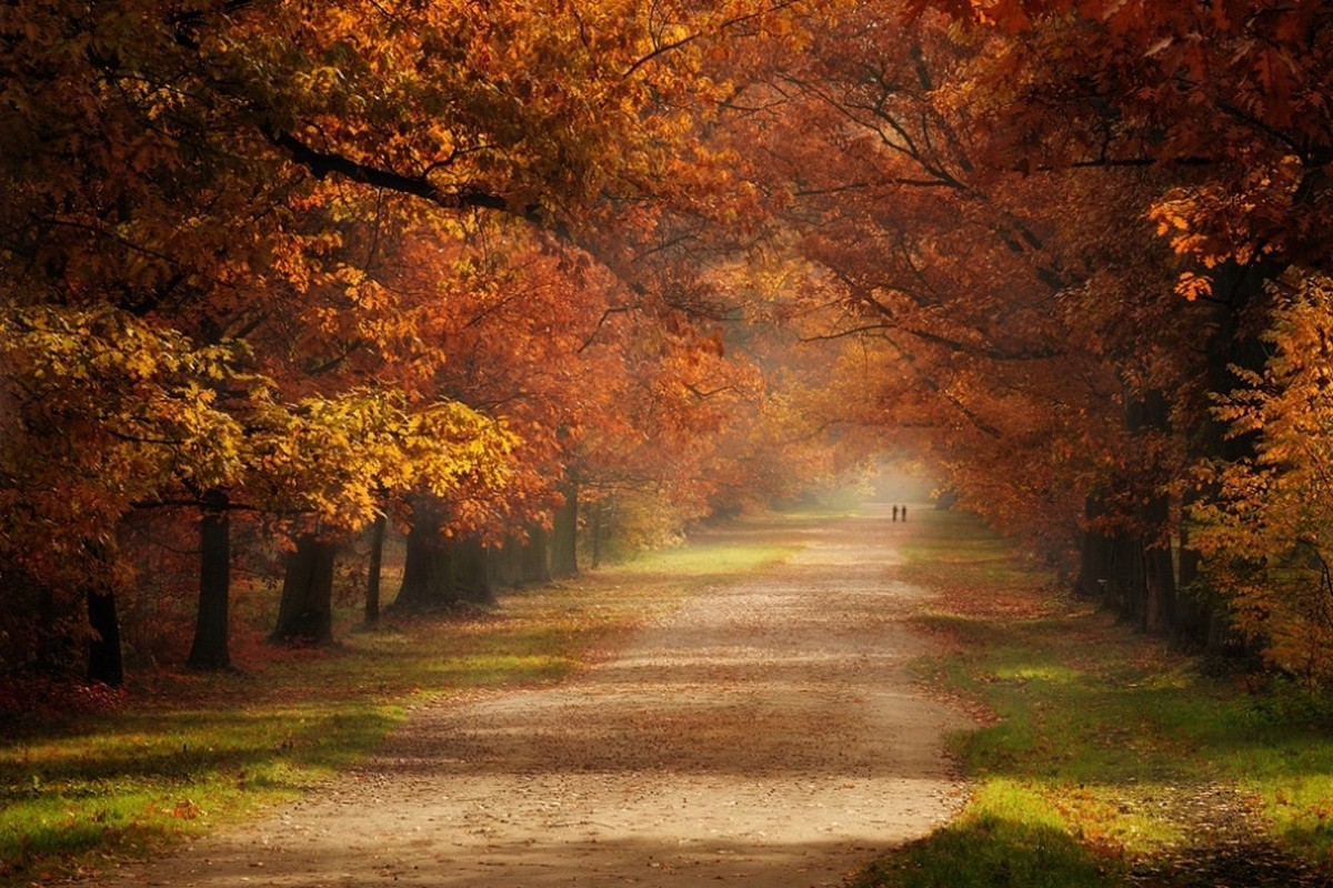 Fall Foliage Desktop Wallpaper Fall Grass Road Trees Mist Green Orange Leaves