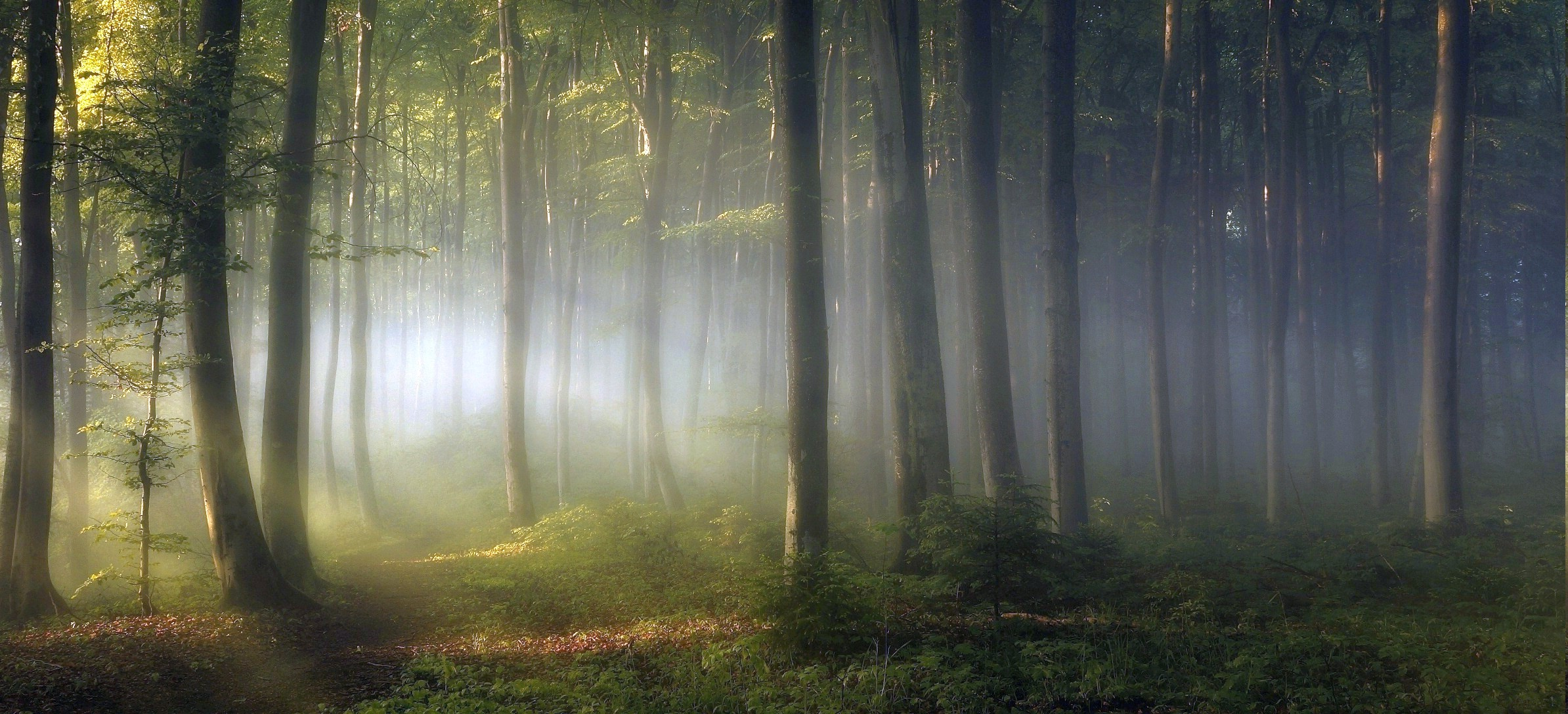 1280x800 Fall Wallpaper Morning Forest Shrubs Sunrise Trees Path Mist