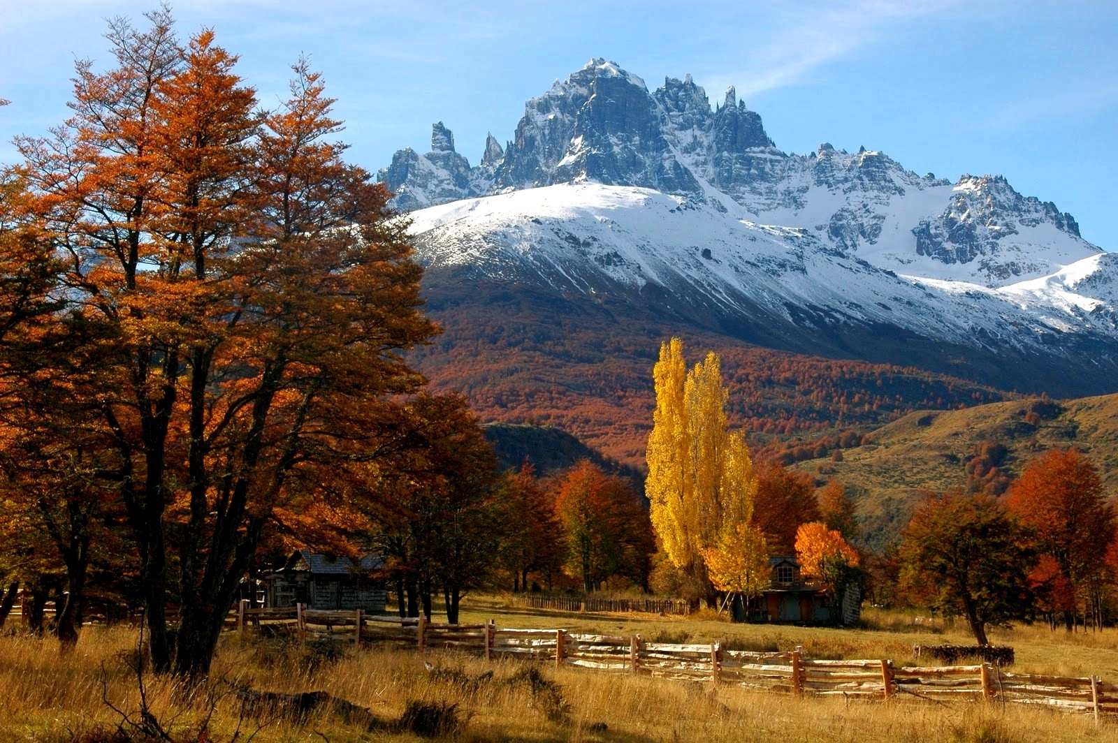 Free Full Screen Fall Wallpaper Fall Fence Trees Mountain Forest Chile Patagonia