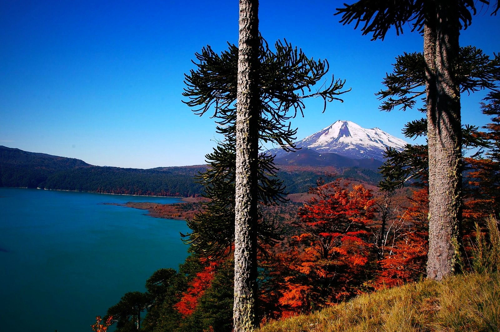 Full Screen Desktop Fall Wallpaper Volcano Chile Forest Lake Fall Snowy Peak Trees
