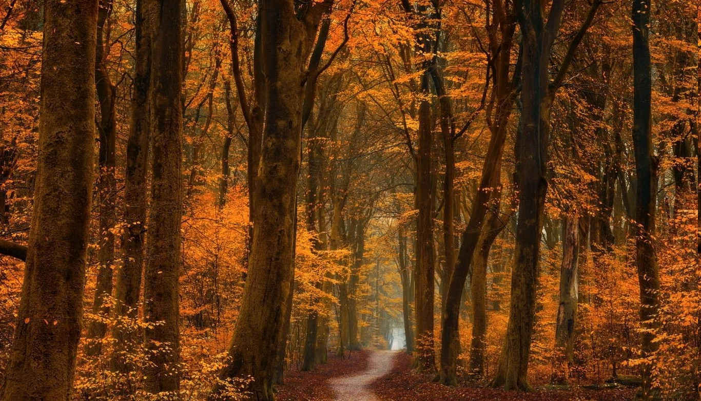 1280x800 Fall Wallpaper Fall Trees Path Forest Road Leaves Gold Amber