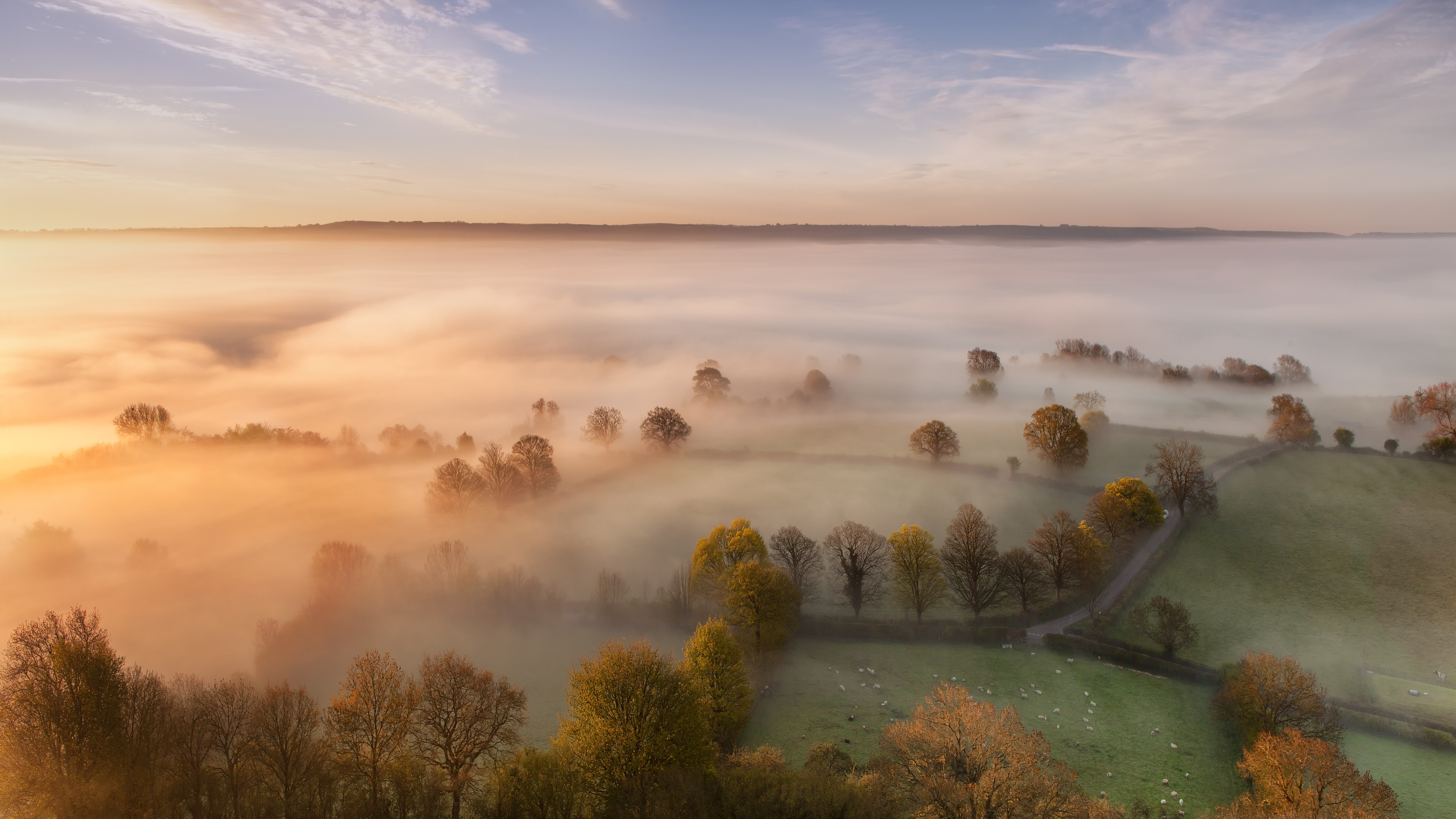 Home Screen Wallpaper Fall Nature Landscape Mist Trees Wallpapers Hd Desktop And