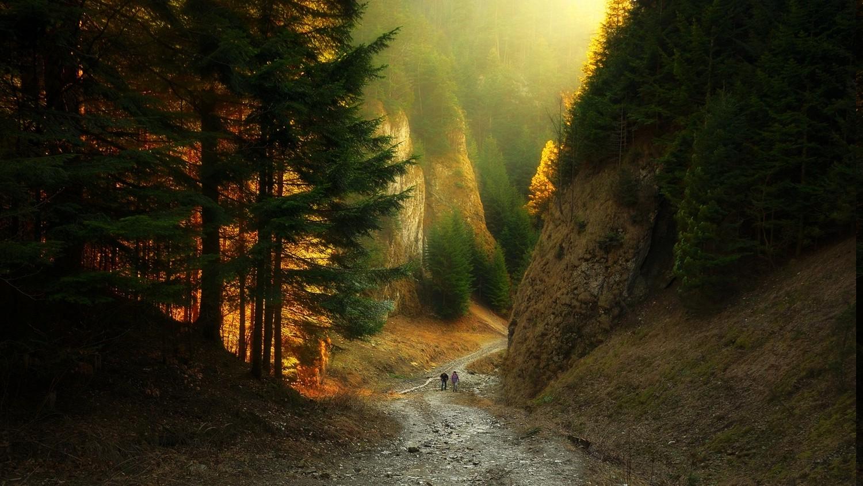 Fantasy Forest 3d Desktop Wallpaper Canyon Path Forest Sunlight Mountain Nature Sunset
