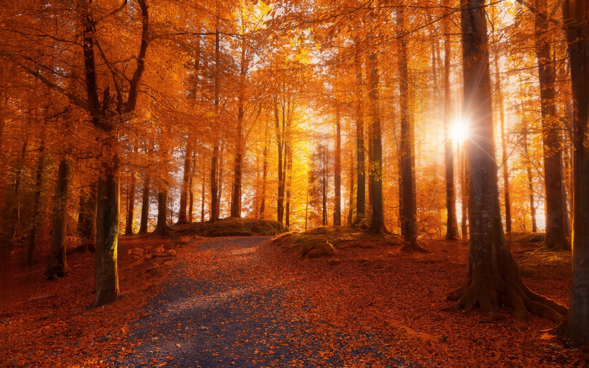 Full Screen Desktop Fall Leaves Wallpaper Morning Forest Sunlight Path Trees Fall Leaves