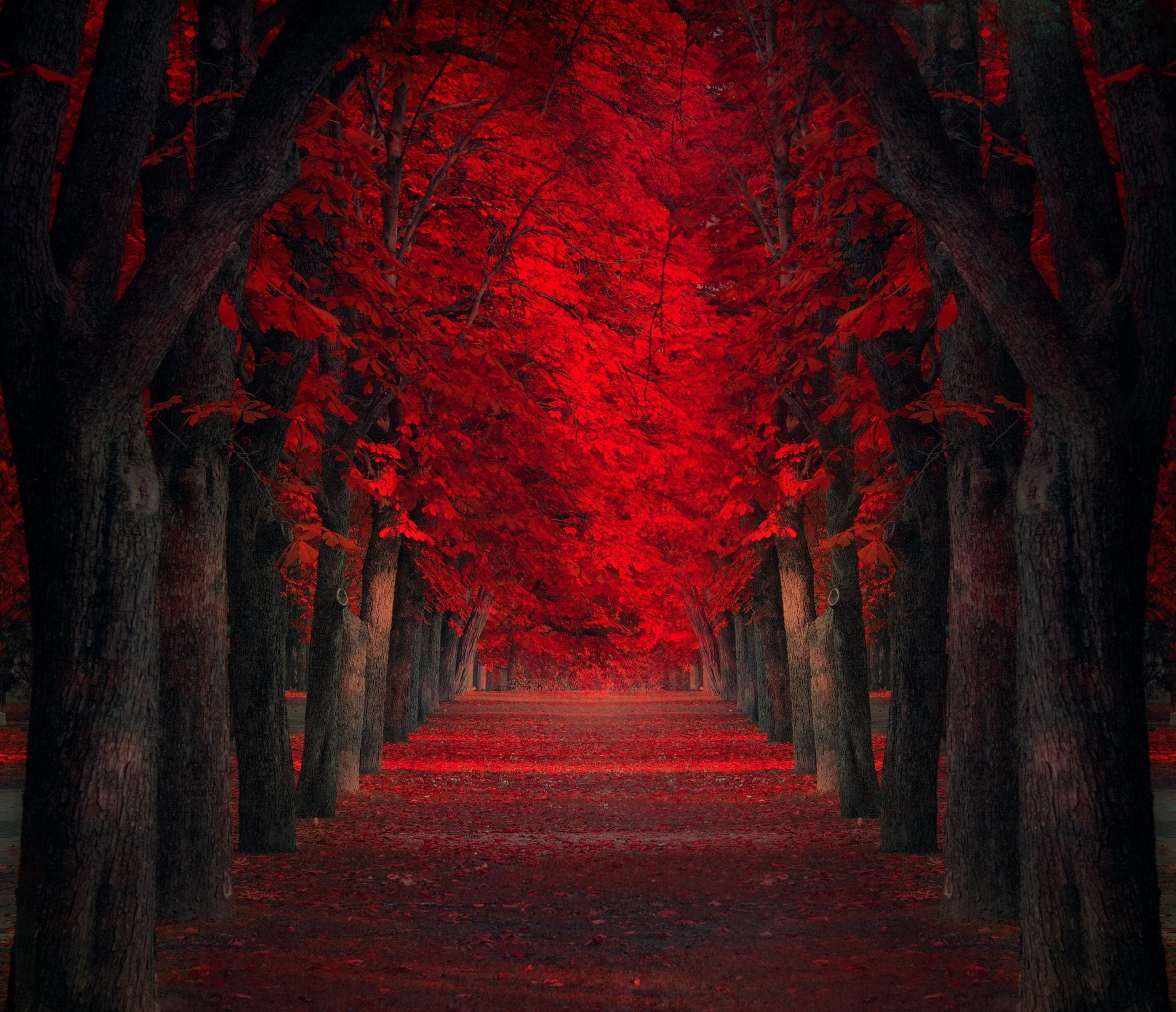 Free Fall Hp Widescreen Wallpapers Path Trees Red Leaves Fall Park Nature Landscape